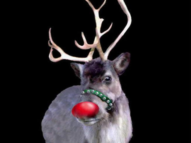 Check Out Real Live Reindeer at SF Zoo