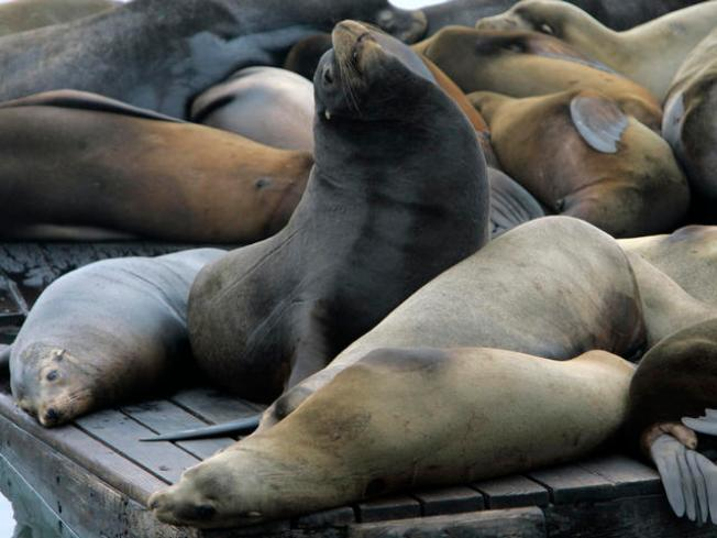 City to Sea Lions: Keep Out!