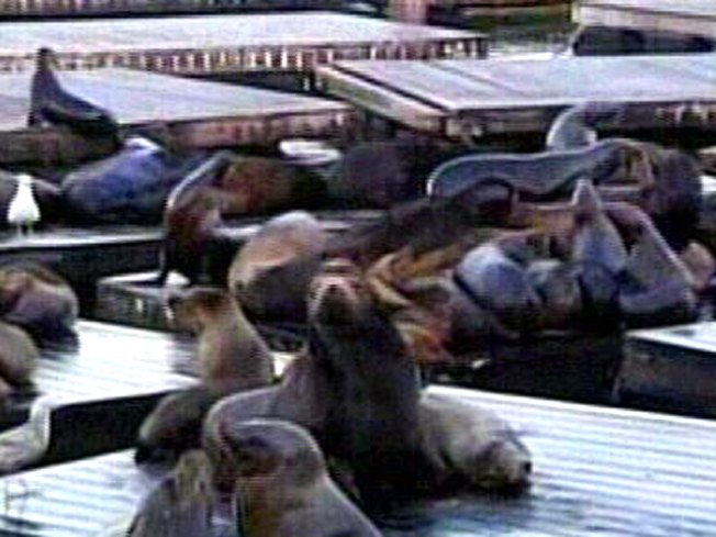 Sea Lions Party Like It's 1989