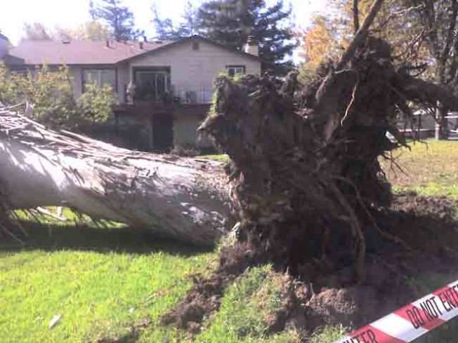 Timber! Winds Make First Strike in South Bay