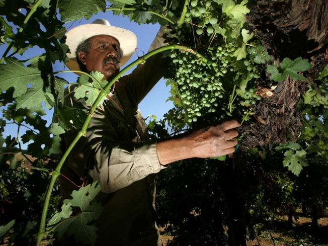 Wine Industry Struggling to Keep Its Cup Full
