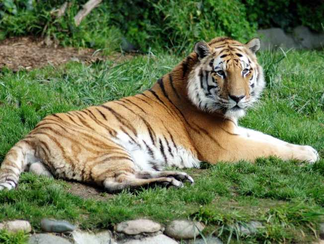 SF Zoo Loses Much Beloved Creature