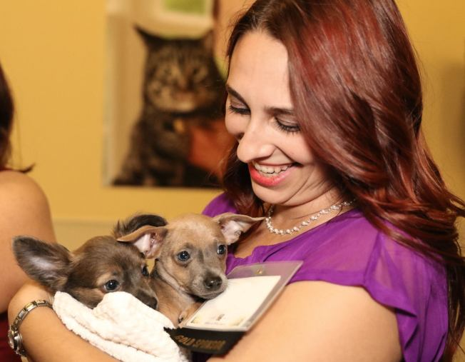 ARF Free Adoptions in Contra Costa County