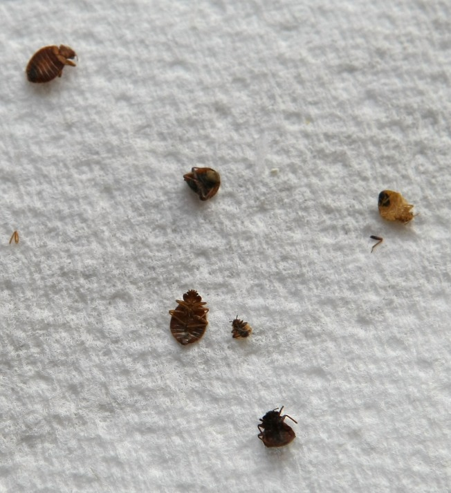 San Francisco Beats New York in Bedbug Battle