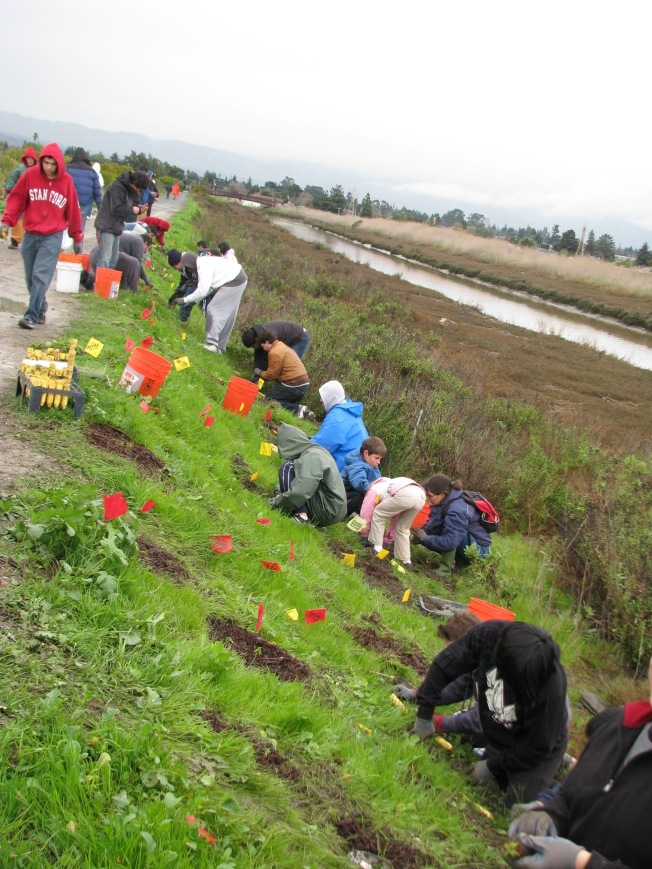 Volunteer at the Martin Luther King Jr. Regional Shoreline Nov 4