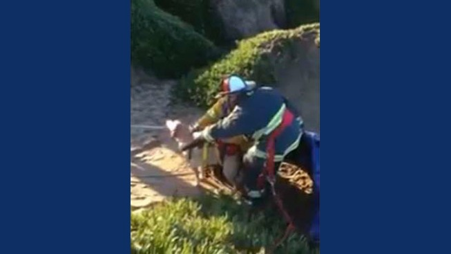 Dogs Rescued After Slipping Down Cliff at Fort Funston