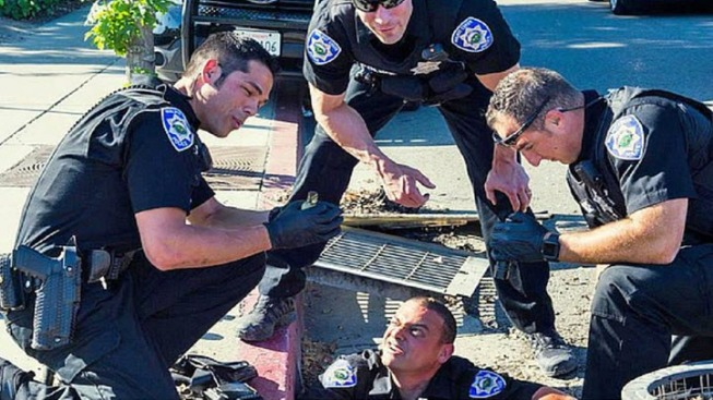 Ducklings Rescued By Walnut Creek Police Officers Reunited With Mother