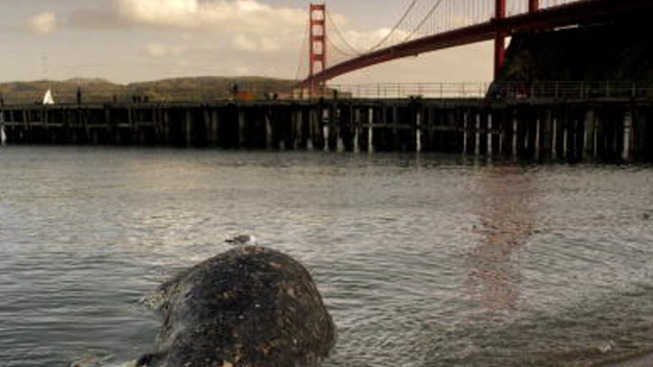 Ships Urged to Slow Down for Whales Outside SF Bay