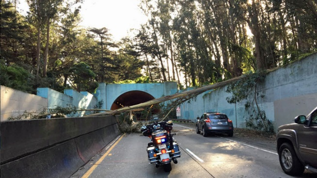 Fallen Tree Blocks Highway 1 Near MacArthur Tunnel in San Francisco