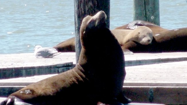 Sea Lions Shake Their Moneymakers