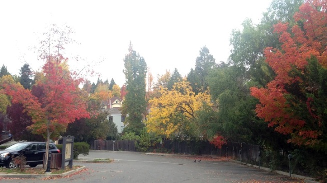 Gold Country Wow: Victorian Fall Colors Tour