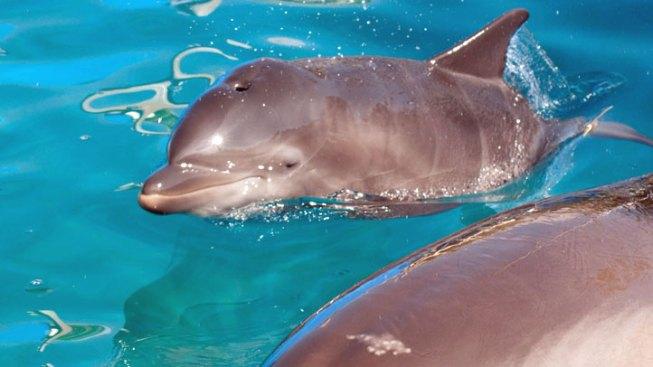 SeaWorld Orlando Ends Public Dolphin Feedings