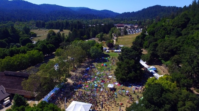 Redwood Mountain Faire: Tree-Adjacent Lark