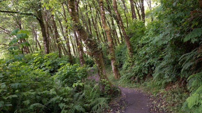 Redwood Lovers, Take a Walk (or Run) in the Woods