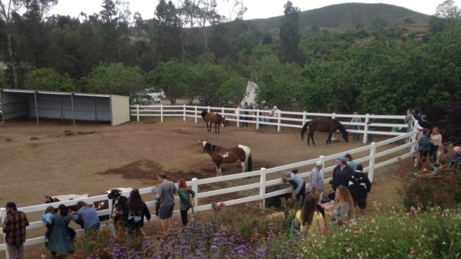 Sniper Kills Horse In Sonoma