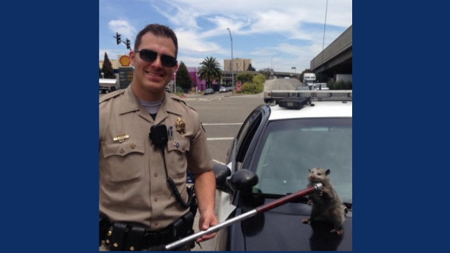 Oakland CHP Officer Rescues Possum on I-880