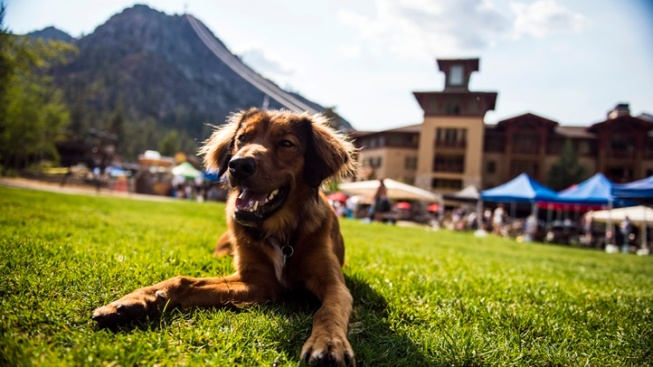 Village at Squaw Valley: Peaks and Paws Fest