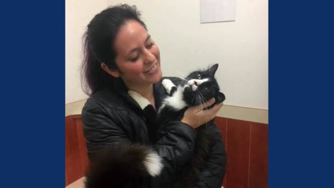 Lost and Found: Missing Cat From Lathrop Recovered About 75 Miles Away in San Francisco