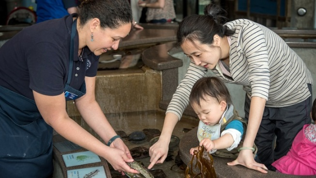Monterey Bay Aquarium: Volunteer Now