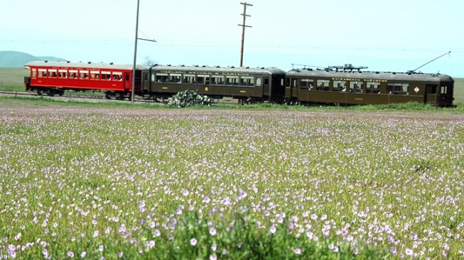 Wildflowers + Rails: Solano County Spring
