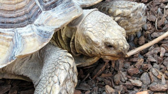 Tortoises Cause Garage Fire in Castro Valley