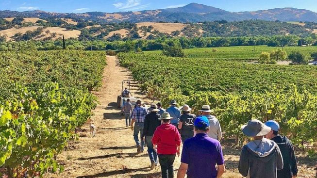 Savor Summer's Start at 'Experience Alexander Valley'