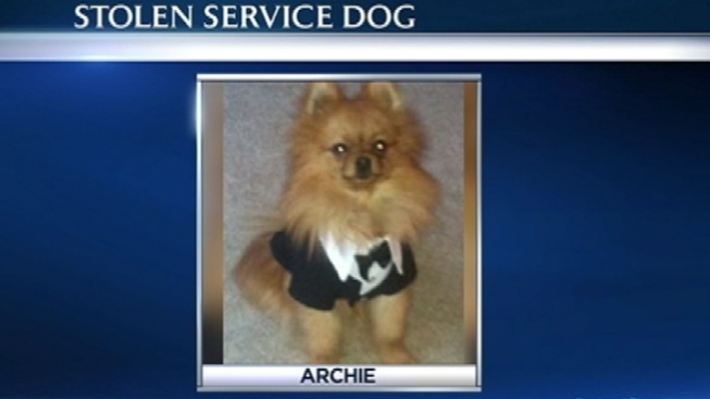 Service Dog Reported Stolen on BART