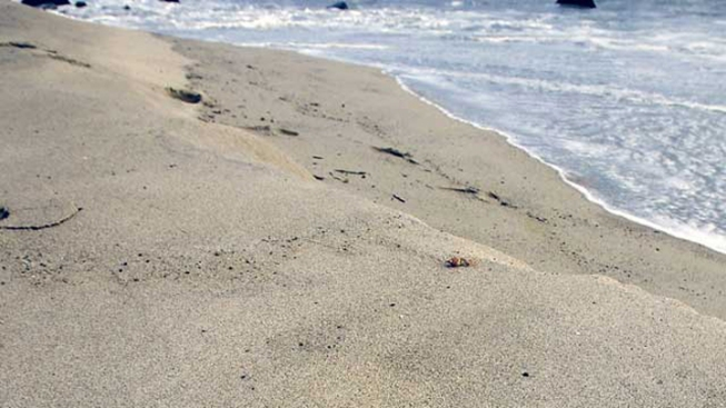 Human Foot Found in Pacifica