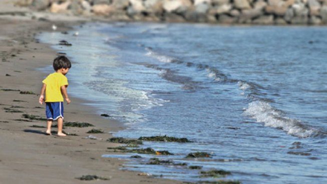 California Beach Water Quality Improving: Report