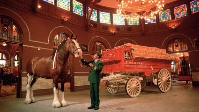 Budweiser Clydesdales Clip-Clop to Fairfield
