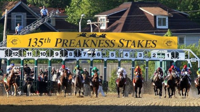 Bay Area Horse in Preakness