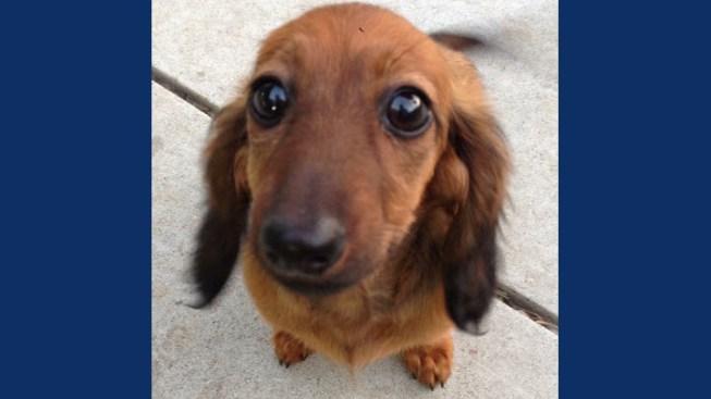 Petsmart Dog Dies Grooming