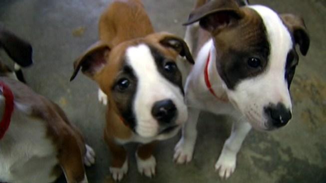 To Beat Panhandling, SF Tries Puppies