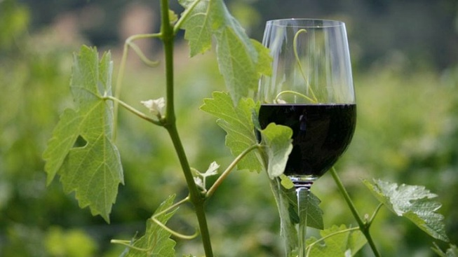 Golden State Wines: Down to Earth Month