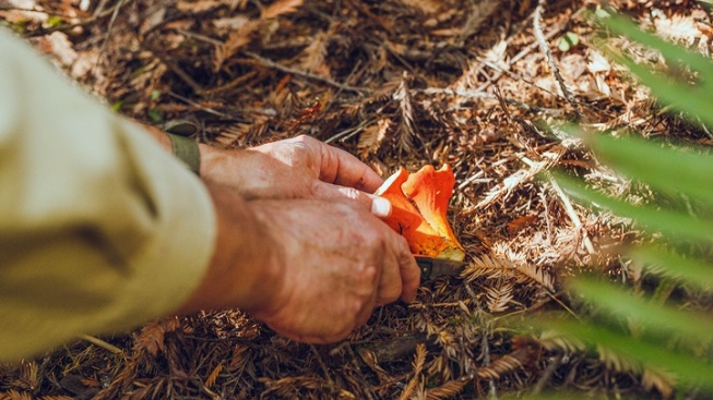 Find a 'Forage and Ferment' Adventure in Mendo