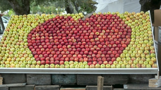 Crisp Jamboree: Gravenstein Apple Fair