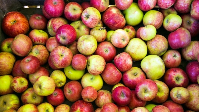 Gravenstein Apple Fair: Bite into an Early Deal