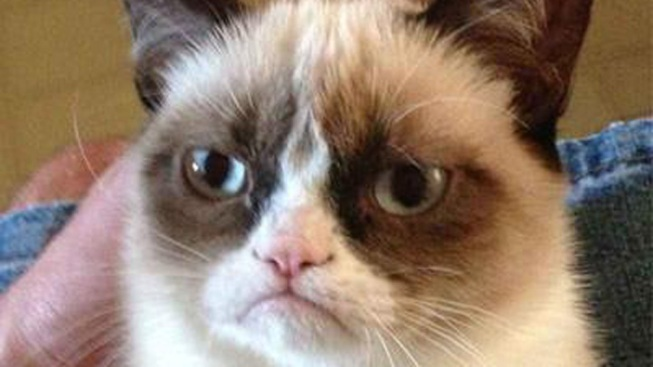The Web's Grumpiest Cat Gets a Movie Deal