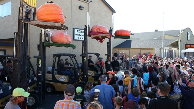 Mega Pumpkin Weigh-Off in Half Moon Bay