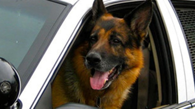Livermore Police K-9 Dog Dies After 8 Years On Patrol