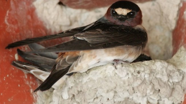 Caltrans Asked to Find Solution For Bird Deaths at 101 Project