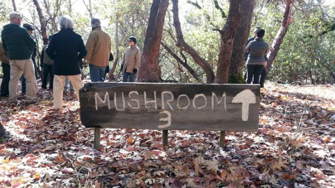Mushroom Foraging at Saracina Vineyards