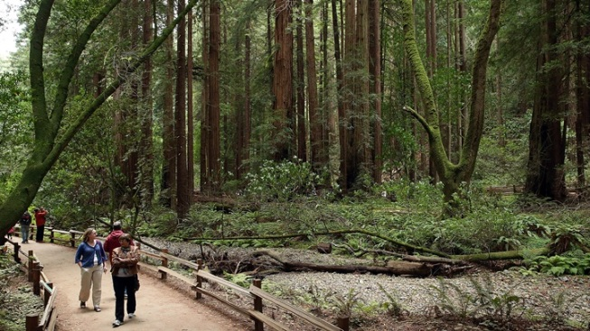 Muir Woods Parking and Transportation Will Need Reservations in 2017