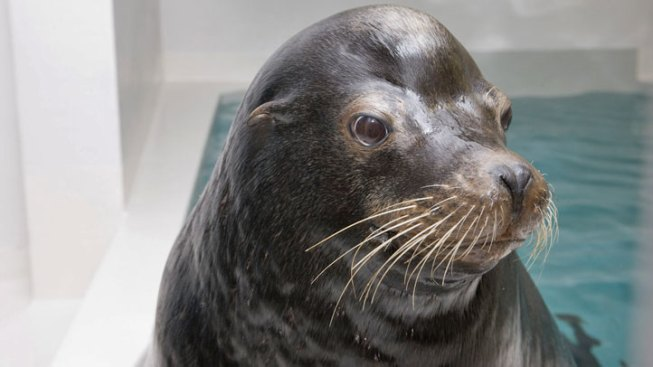 SF Third-Graders Take Stand Against Sea Lion Deaths