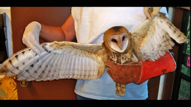Criminal Case Filed Over Mutilated Owl