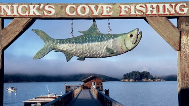 #ReturnTheFish: Nick's Cove Campaign