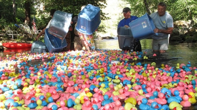 Gold Country Rubber Duck Race