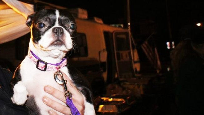 Displaced Super Storm Sandy Pets Arrive in Southern California