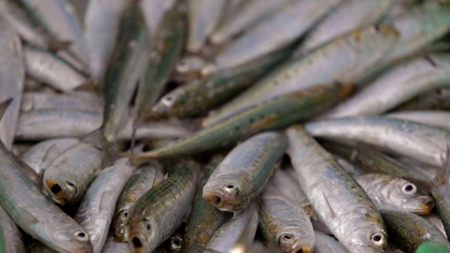 Health Department Warns Against Eating Anchovies, Sardines from Monterey, Santa Cruz Counties
