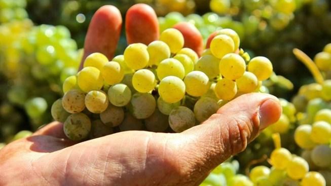 Harvest Gathering: Sip Savor Lodi